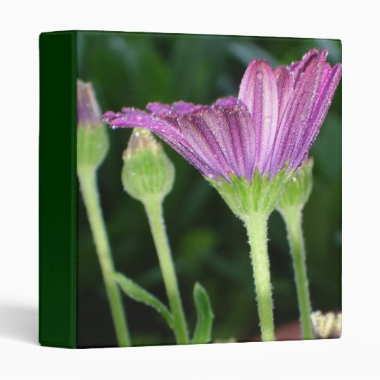 Purple And Pink Daisy Flower in Full Bloom 3 Ring Binder