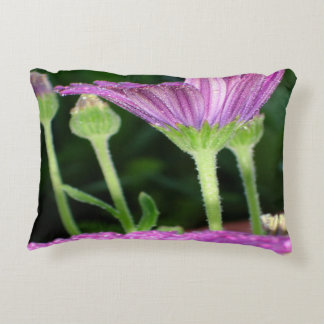 Purple And Pink Daisy Flower in Full Bloom Accent Pillow