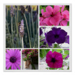 Purple and Pink Flowers Posters
