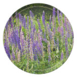 Purple and Pink Lupine Photograph Plate