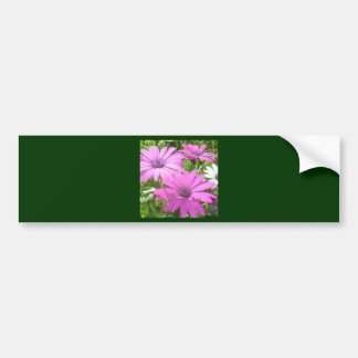 Purple And Pink Tropical Daisy Flower Bumper Sticker