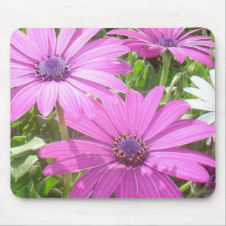 Purple And Pink Tropical Daisy Flower Mouse Pad
