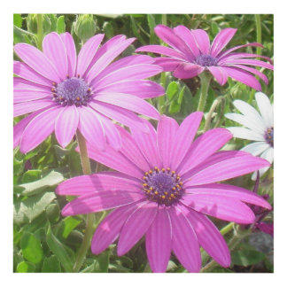 Purple And Pink Tropical Daisy Flower Panel Wall Art