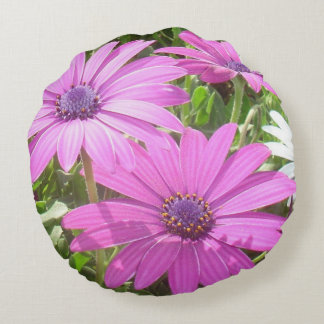 Purple And Pink Tropical Daisy Flower Round Pillow