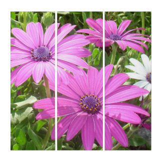 Purple And Pink Tropical Daisy Flower Triptych