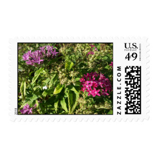 Purple and Pink Tropical Flowers Postage