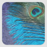 Purple and Teal Peacock Square Sticker