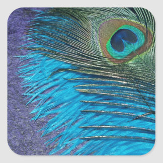 Purple and Teal Peacock Sticker