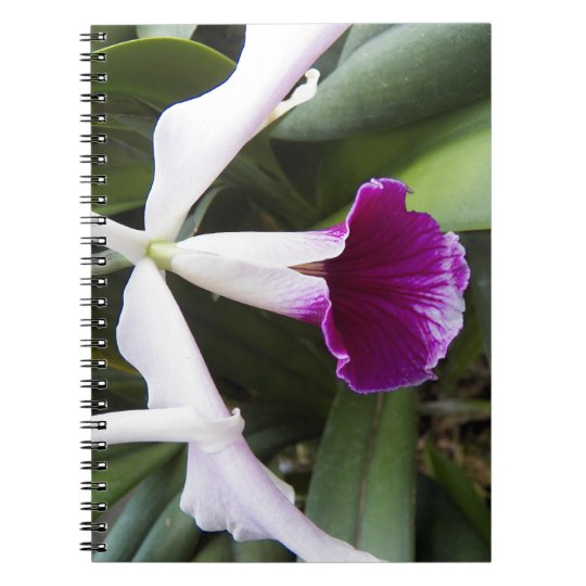 Purple And White Cattleya Orchid Floral Notebook