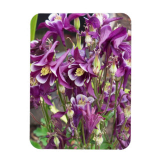 Purple and White Columbines Flexible Magnet