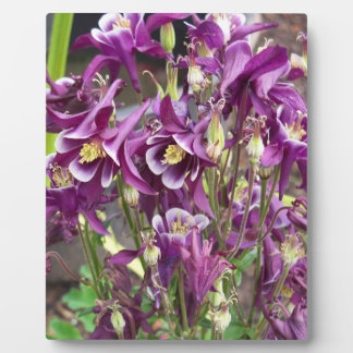 Purple and White Columbines Plaque