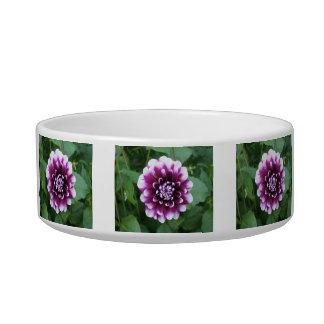 Purple and White Dahlia Bowl
