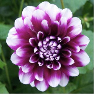Purple and White Dahlia Cutout