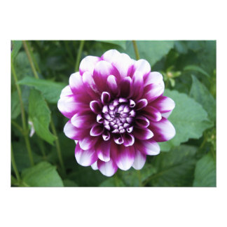 Purple and White Dahlia Personalized Invites