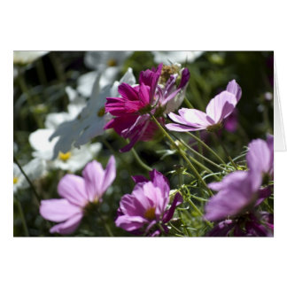 Purple and White Daises Card
