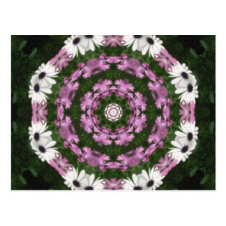 Purple and White Daisies Kaleidoscope 4 Postcard