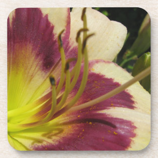 Purple and White Daylily Closeup Cork Coasters