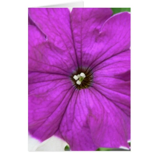 Purple And White Flower In The Grass Greeting Card
