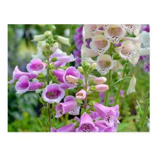 Purple and white foxglove flowers postcard