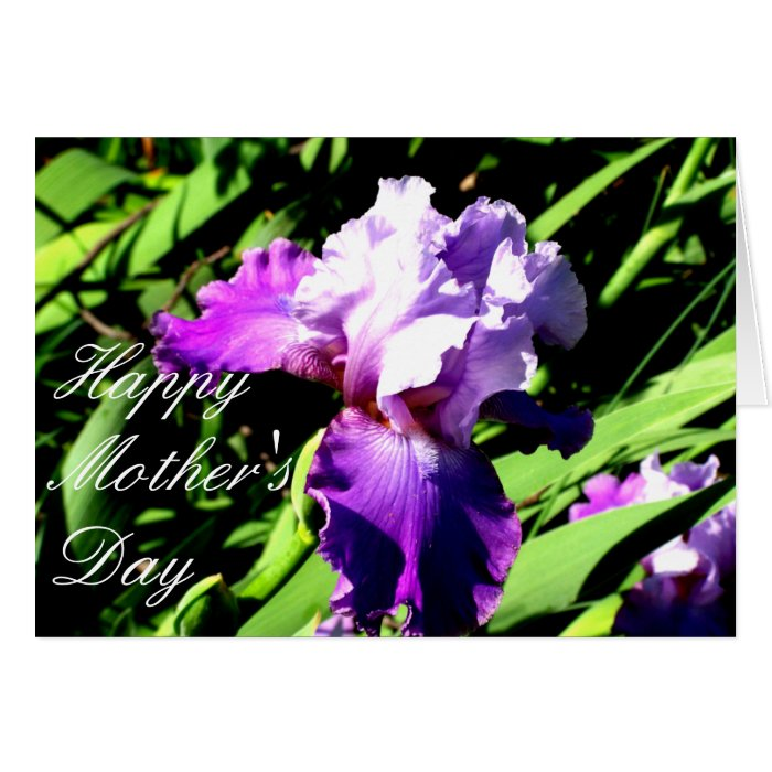 Purple and White Iris Card