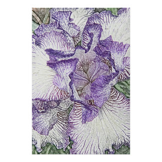 Purple and white iris from above poster