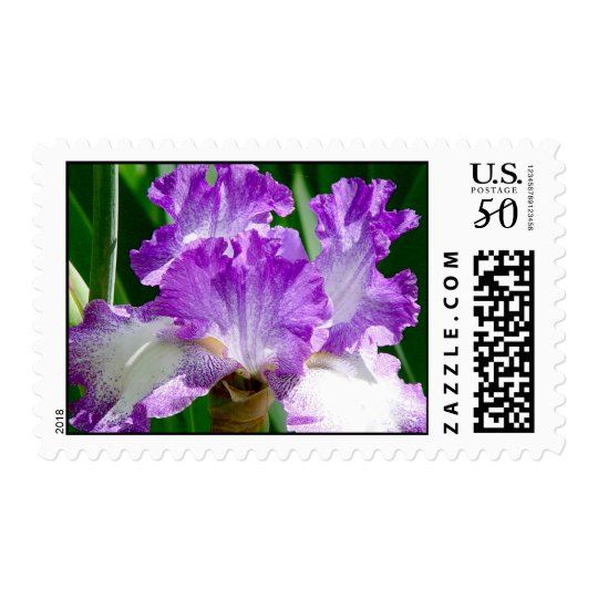 Purple and White Iris Postage