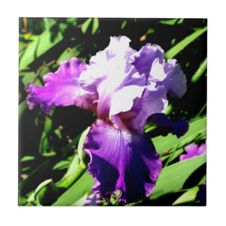 Purple and White Iris Tile