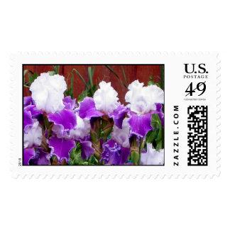 Purple and White Irises Postage