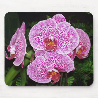 Purple and White Orchid Mouse Pad