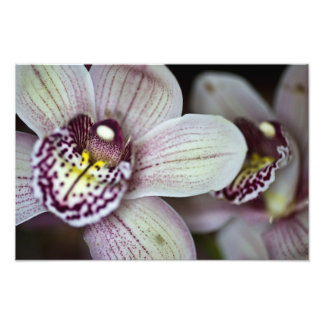 Purple and White Orchid Photo Print