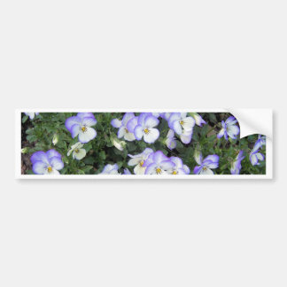 Purple and White Pansies Bumper Sticker
