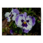Purple and White Pansies Colorful Floral Card