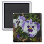 Purple and White Pansies Colorful Floral Magnet
