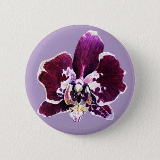 Purple and White Phalaenopsis Button