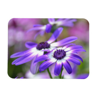 Purple and White Spring Flowers Magnet
