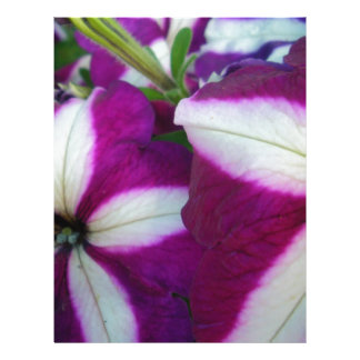 Purple and White Striped Petunias Letterhead