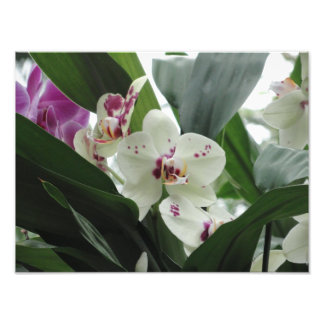 Purple and white tropical flowers photo art