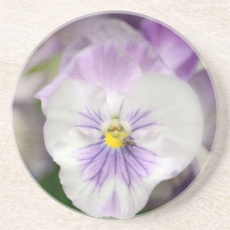 Purple and White Violas by Shirley Taylor Sandstone Coaster