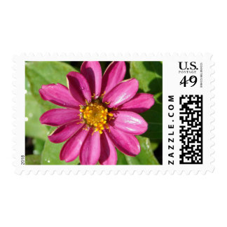 Purple and Yellow Flowers Postage