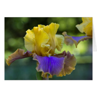 Purple and Yellow Iris Blank Greeting Card