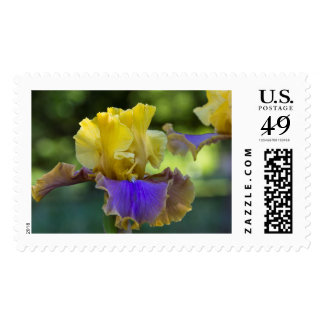 Purple and Yellow Iris Postage Stamp