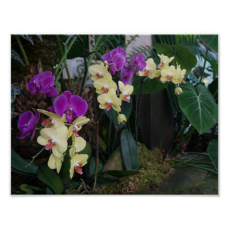 Purple and Yellow Orchids Poster