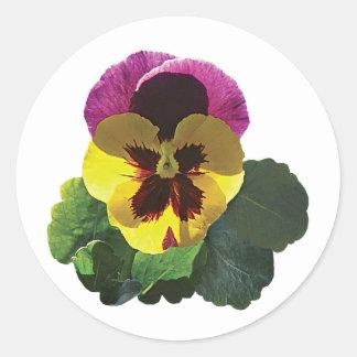 Purple and Yellow Pansy Classic Round Sticker
