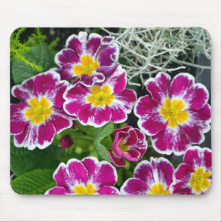 Purple and yellow primrose flowers mouse pad
