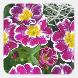 Purple and yellow primrose flowers square stickers