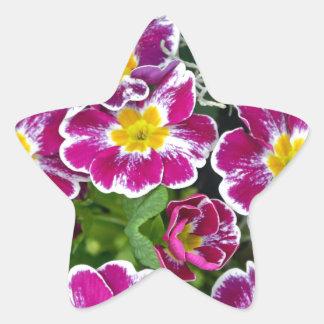 Purple and yellow primrose flowers star stickers