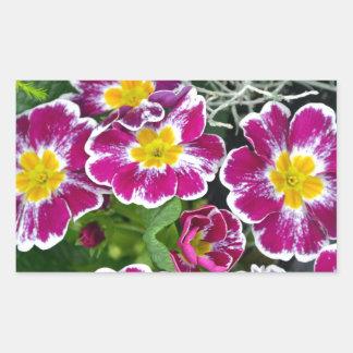 Purple and yellow primrose flowers rectangular stickers