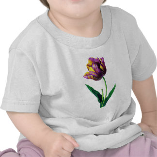 Purple and Yellow Tulip by Redoute Tees