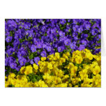 Purple and Yellow Violas Colorful Floral Card