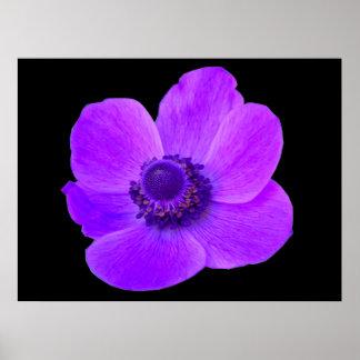 Purple Anemone Postyer Poster